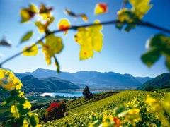 Caldaro in Alto Adige