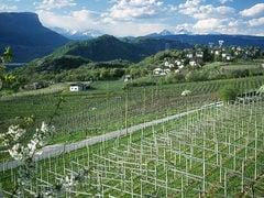 Montan in Südtirol