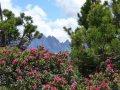 Bergfrühling, Wanderzeit & Alpenrosen