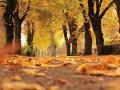 Autumn weekend