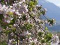 Frühlingserwachen in Sterzing