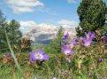 Settimane della fioritura