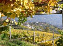 Escursione nell'autunno soleggiato da 415,00 Euro