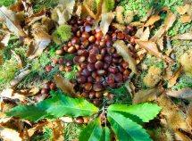 Castagne, vino, escursioni nell'autunno da 235,00 Euro