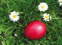 Speciale per Pasqua 7=6 da 468,00 Euro