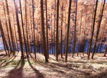 Goldener Herbst 7=6 ab 440,00 Euro