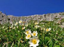 Wellness ed escursioni nelle Dolomiti da 288,00 Euro