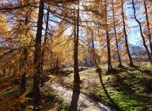 Der Goldene Herbst ab 721,00 Euro