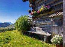 Alpine Naturwochen ab 660,00 Euro