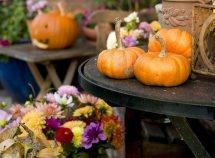 L'autunno è la stagione dei piaceri ... da 378,00 Euro