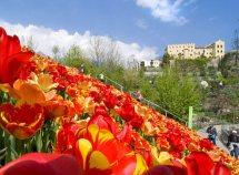 Primavera a Merano da 619,00 Euro