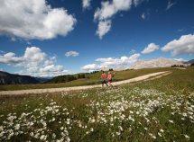 Le montagne in fiore da 587,00 Euro